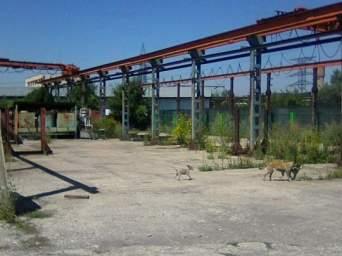 platforma betonata de inchiriat, 1000 mp, 1000 euro